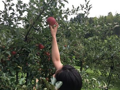 りんご10.JPG