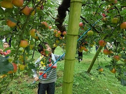 りんご11.JPG