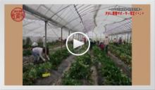 動画で見よう!~イチゴ収穫体験・株撤去作業
