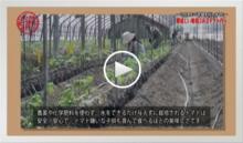 動画で見よう!~美味しい有機JASトマト作り