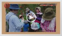 動画で見よう!~三瀬村リンゴ袋剥ぎ作業&リンゴ狩り