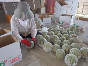 melon_09.JPG