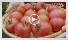 動画で見よう!~トマト