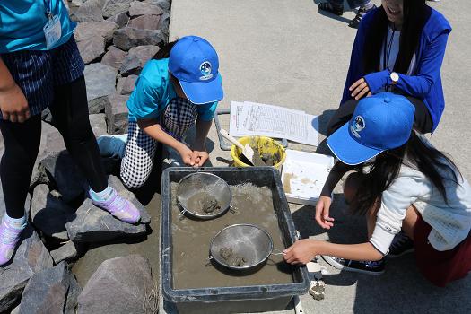 干潟の生き物調査